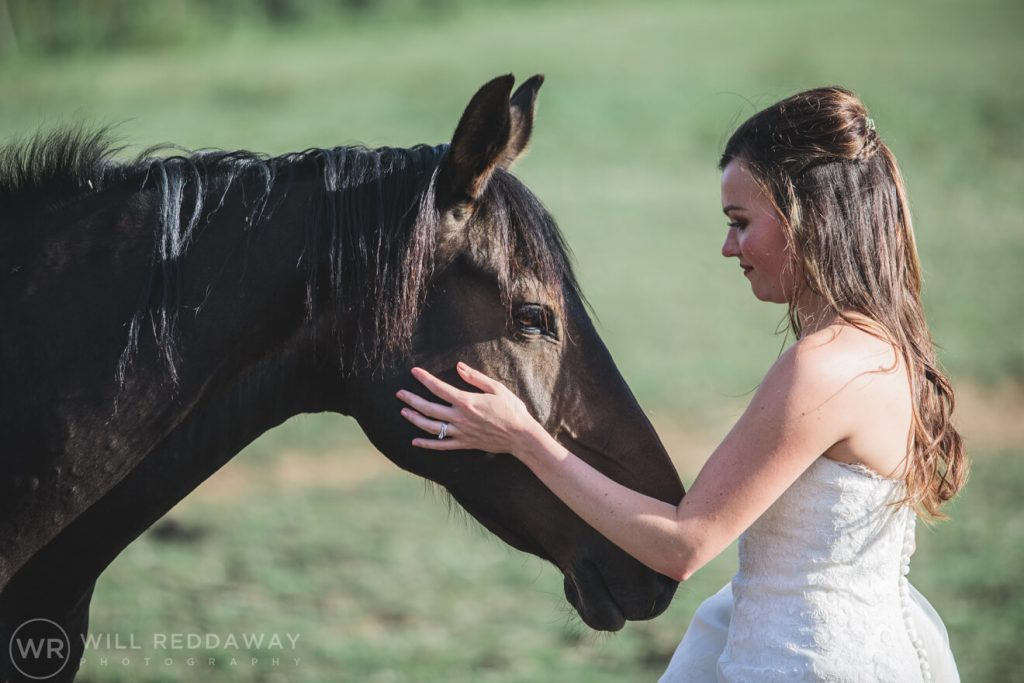 Marquee Wedding | Devon Wedding Photographer | Horses
