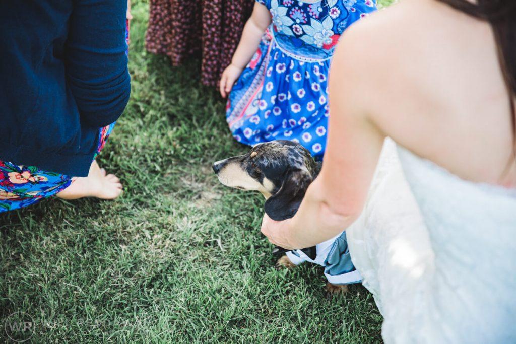 Marquee Wedding | Devon Wedding Photographer | Sausage Dog