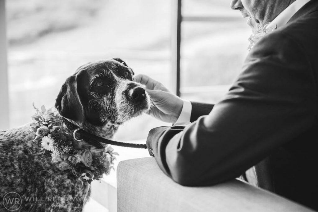 South Hams Wedding | Devon Wedding Photographer | Dog