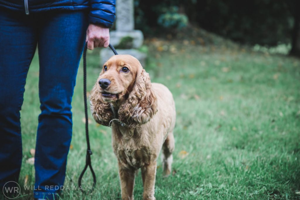 The Oak Barn Wedding | Devon Wedding Photographer | Dog